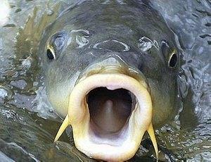 Клев рыбы в зависимости от положения Луны в Зодиаке
