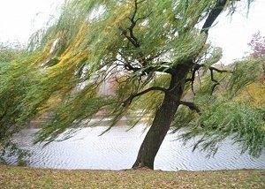 Влияет ли ветер на клев?