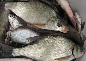 Зимняя рыбалка подлещика