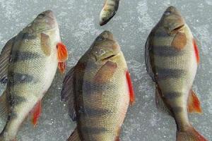 Ловля рыбы на фидер: секреты поимки нефидерной рыбы